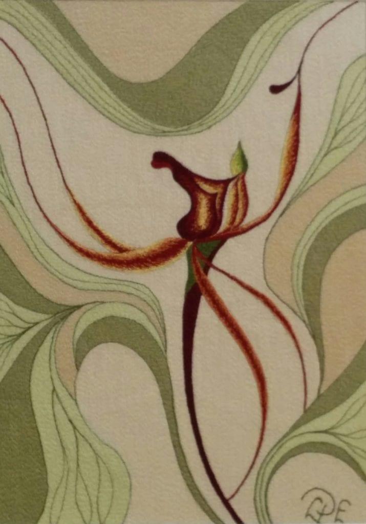 Lois-Parish-Evans-a-spidery-orchid
