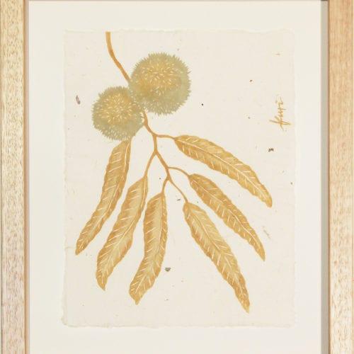 Kuri – Japanese Chestnut